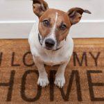 Dog on a doormat